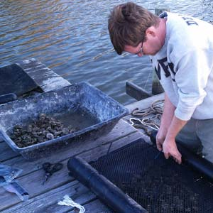 Cleaning Oyster Garden
