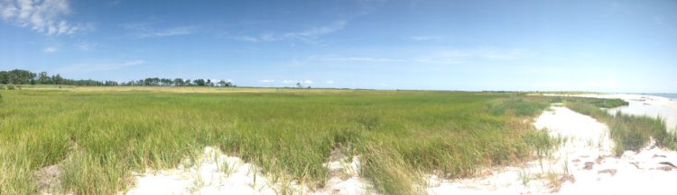 Marshland and grasses on New Point Comfort Beach