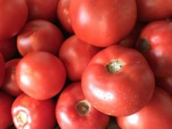 Fresh Tomatos from Inn at Tabbs Creek Hay Bale garden