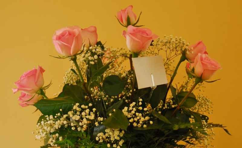 dozen pink and white roses